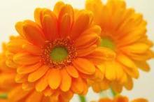 $ぐーたらな色日記-オレンジフラワー